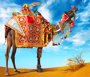 Things to do - general